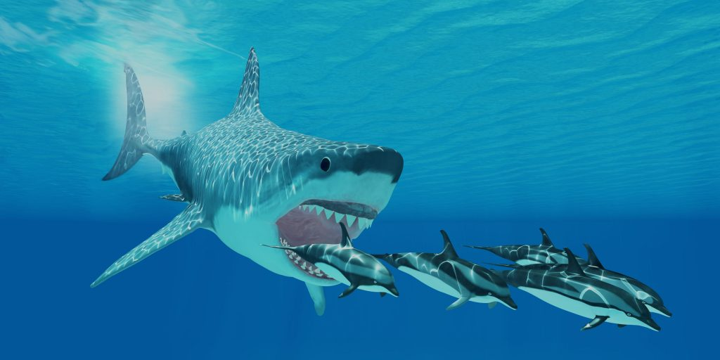 Shark Eating Fish